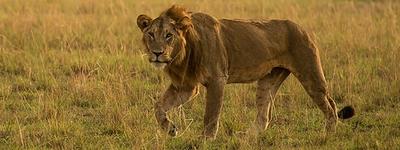 5 days safari in Uganda