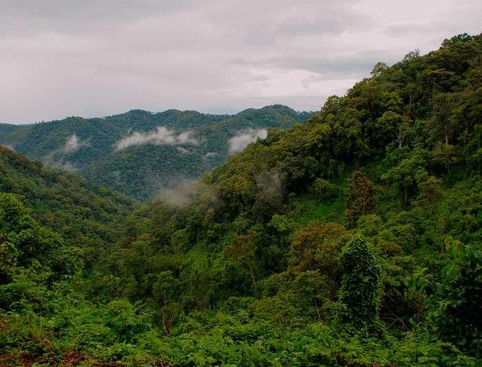 5 Days Gorilla Tours, Chimpanzee Trek and Wildlife Safari