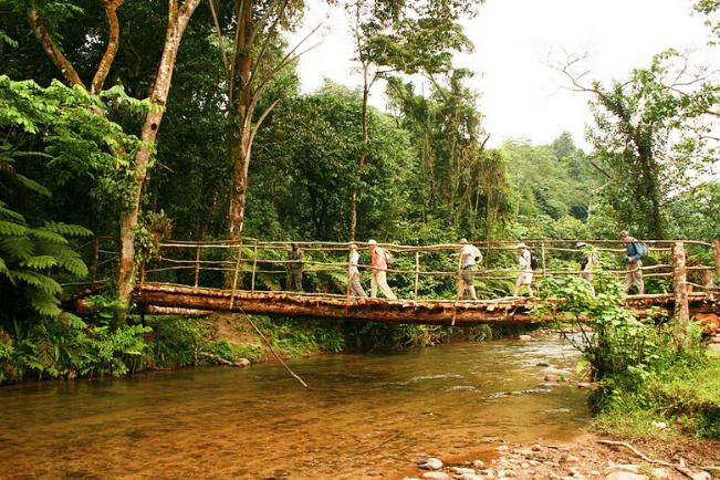 Forest walk Bwindi