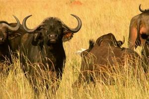 wild adventure uganda